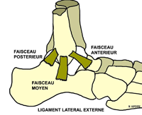 Pathology - ANKLE - Ligament - Ankle sprain in athletes